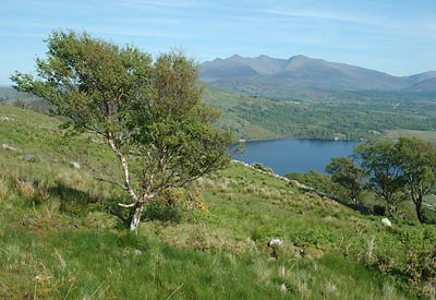 View of the MacGillycuddy Reeks over Lough Caragh, County Kerry