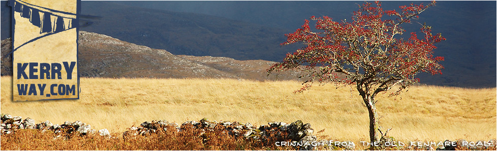 Hawthorn Tree from the Old Kenmare Road on the Kerry Way